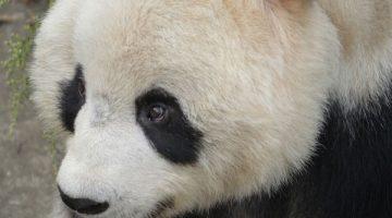 Google Panda Cezasından Kurtulma Rehberi