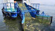 Körfezden yılda ortalama 1000 ton çöp toplanıyor