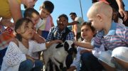 Ovacık Tarım ve Sakız Koyunu Şenliği